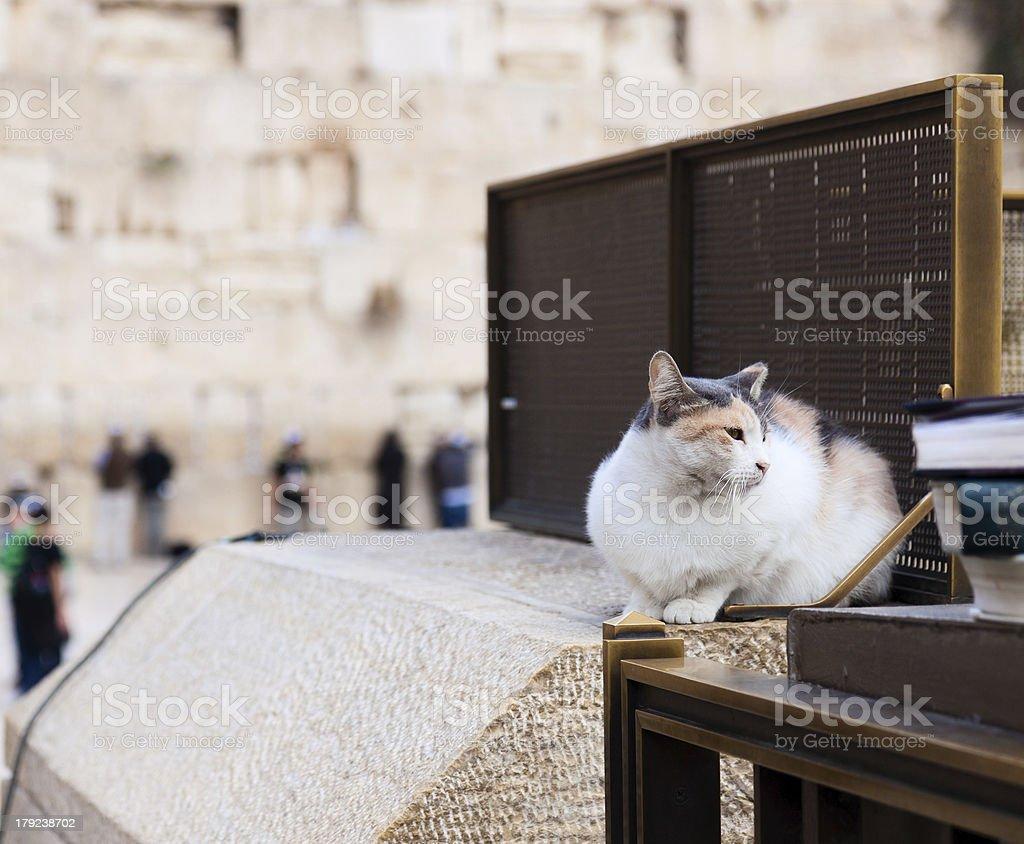 The Jerusalem cat, who sitting near Wailing Wall royalty-free stock photo