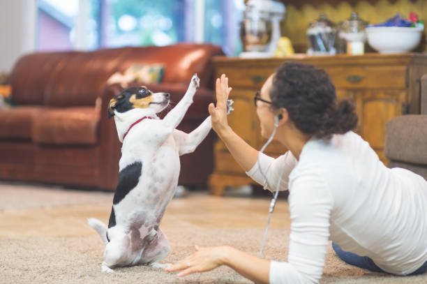 The Joy of Living with Pets Ethnic woman in her 20s plays with dog on living room floor. while she's listening to a podcast. They are having a great time together. He is sitting up and she is teaching him how to high-five. animal tricks stock pictures, royalty-free photos & images