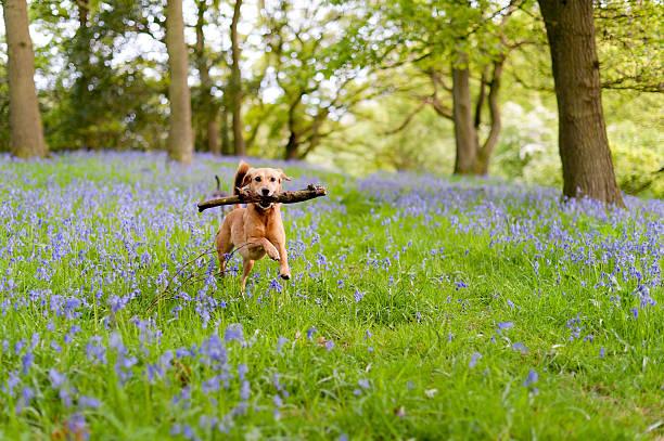 The joys of spring picture id184928615?b=1&k=6&m=184928615&s=612x612&w=0&h=gdh5lubvxvv0ellb27q 2ijqpf48ox0mowolrivfv0m=