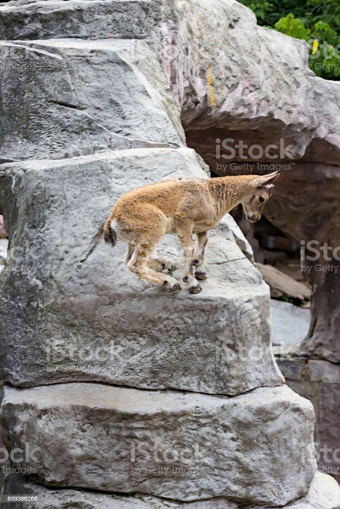 Le gamin de la tournée est caucasienne joue sur les rochers - Photo
