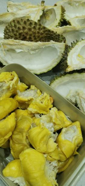 The King of Fruit Durian, also known to the local Malaysian as the king of fruit, due to its thorny ouyer layer durian dessert stock pictures, royalty-free photos & images
