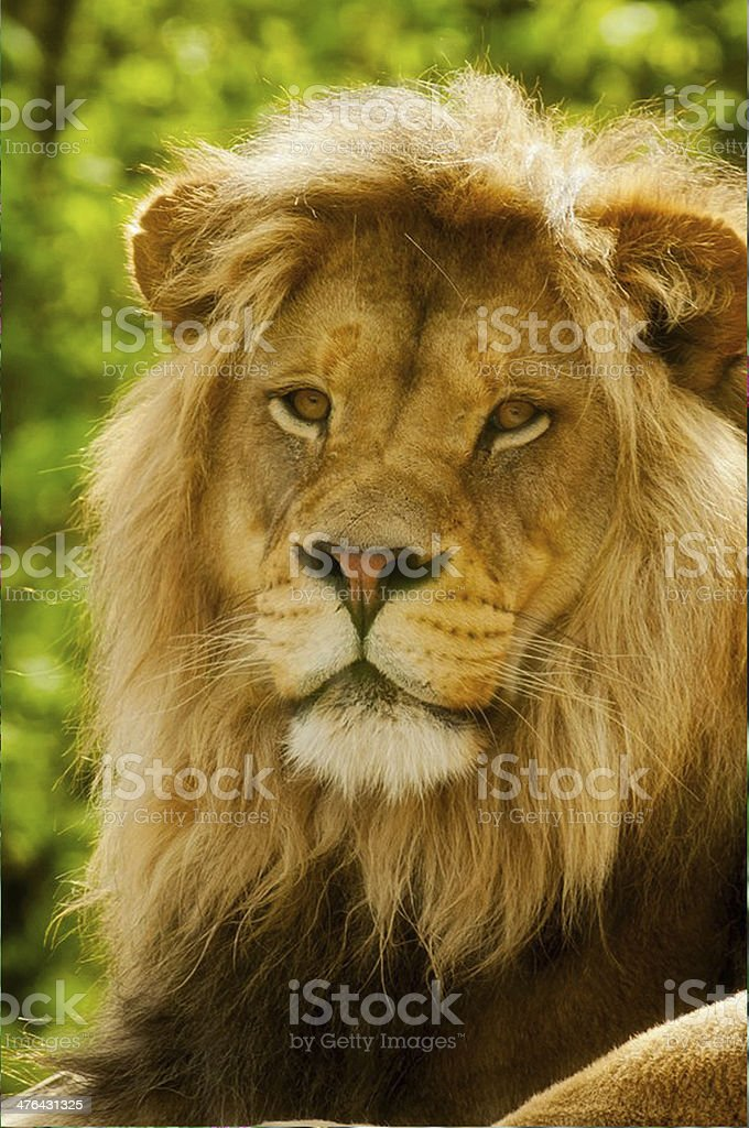 The King-Closeup royalty-free stock photo