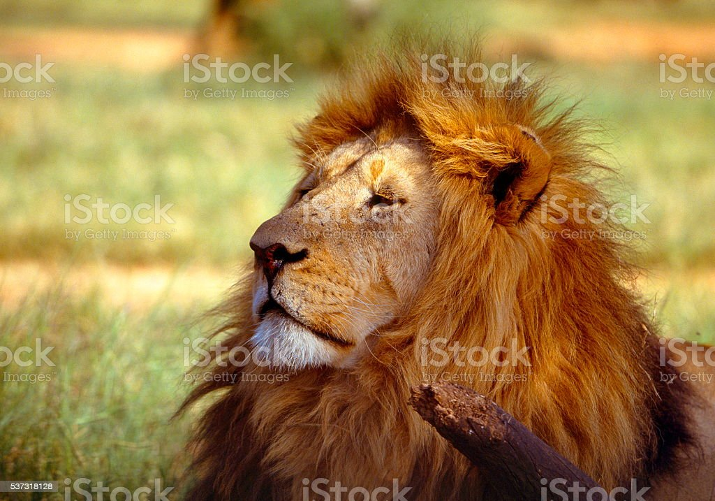 The King's Demeanour stock photo