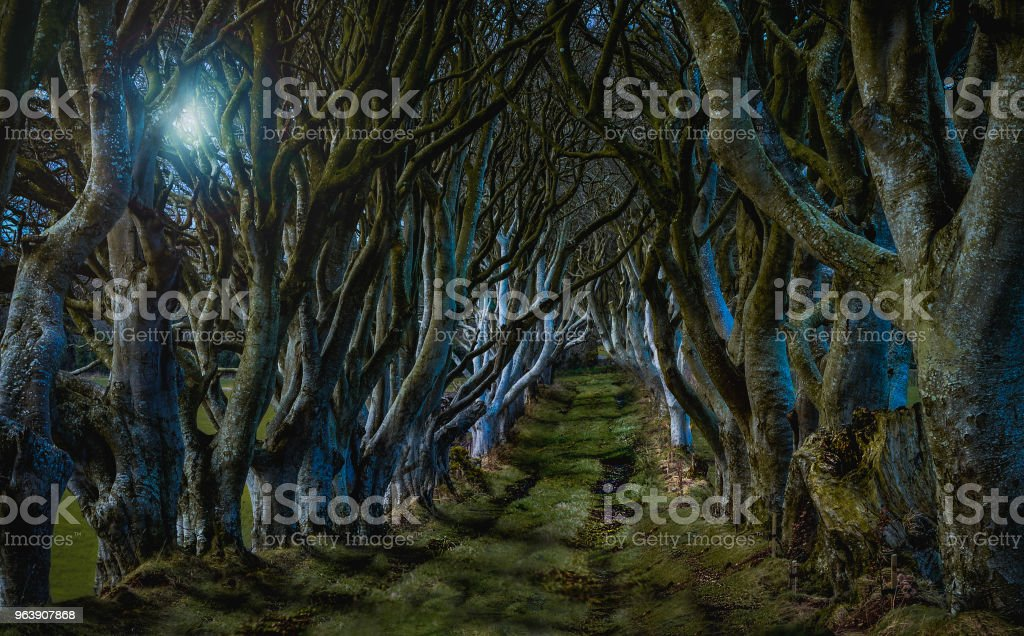 """The Kingsroad"" from Game of Thrones.  In reality this is a tree-lined road called ""The Dark Hedges"" in Northern Ireland - Royalty-free Ancient Stock Photo"