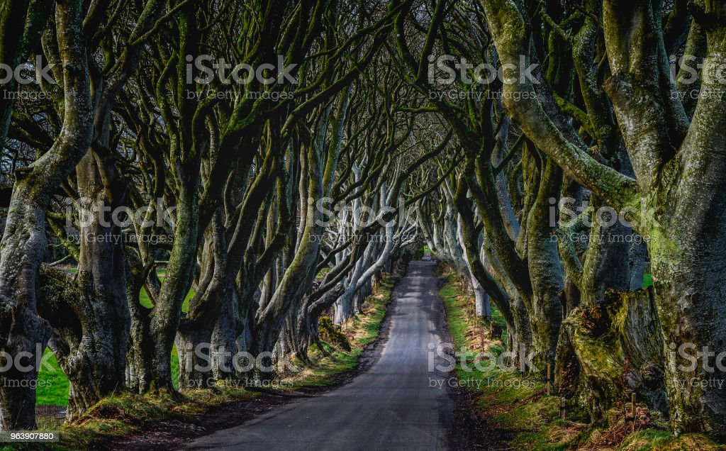 """""""The Kingsroad"""" from Game of Thrones.  In reality this is a tree-lined road called """"The Dark Hedges"""" in Northern Ireland - Royalty-free Acting - Performance Stock Photo"""