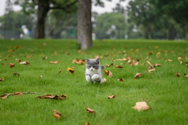 O gatinho jogando na grama - foto de acervo