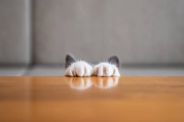 As patas do gatinho estão sobre a mesa. - foto de acervo