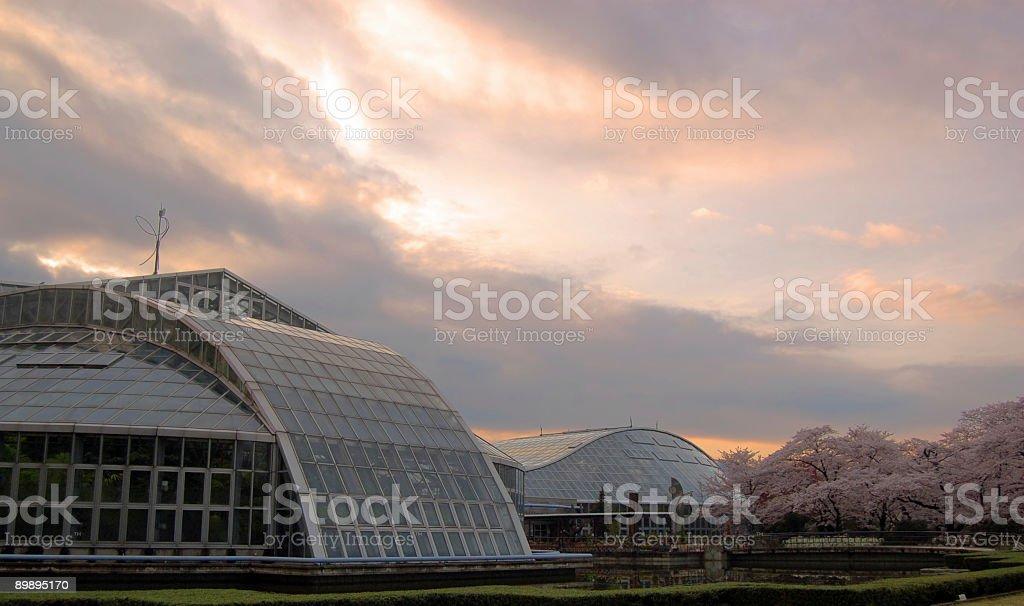 Киотский Ботанический сад Стоковые фото Стоковая фотография