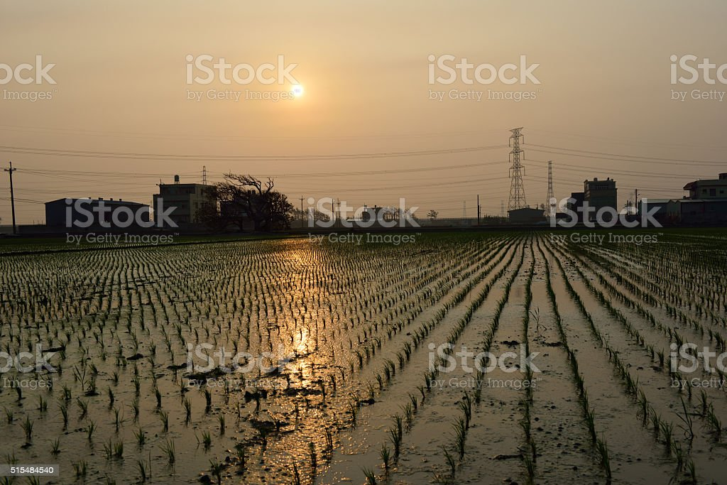 The land of fish and rice stock photo
