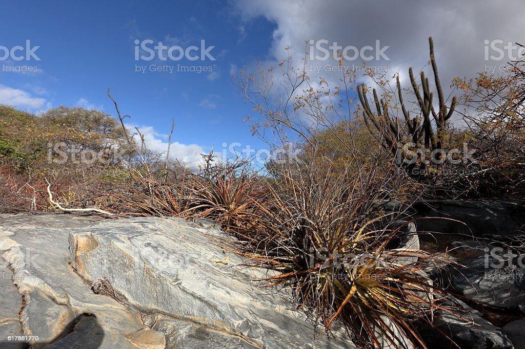 The landscape of Caatinga in Brazil stock photo