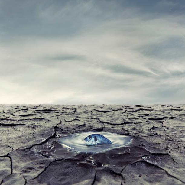 Der letzte Tropfen Wasser – Foto