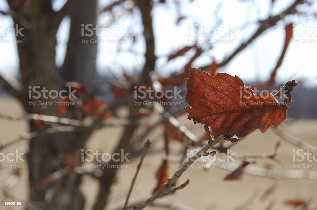 the last leave of fall royalty-free stock photo