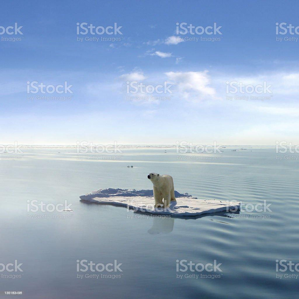 最後の白クマ ストックフォト