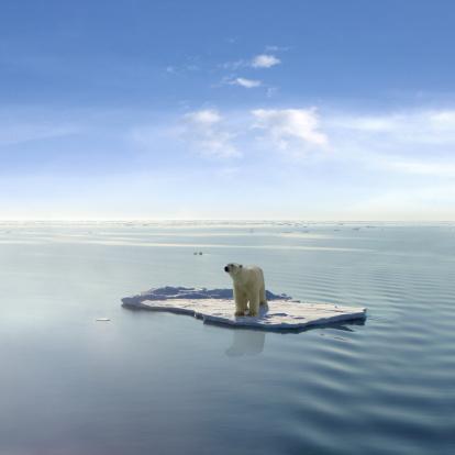 Die Letzte Polar Bear Stockfoto und mehr Bilder von Arktis