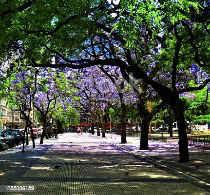 825525754 istock photo The  Lavalle Square (Plaza Lavalle) place  in Buenos Aires city in spring day. 1255036159