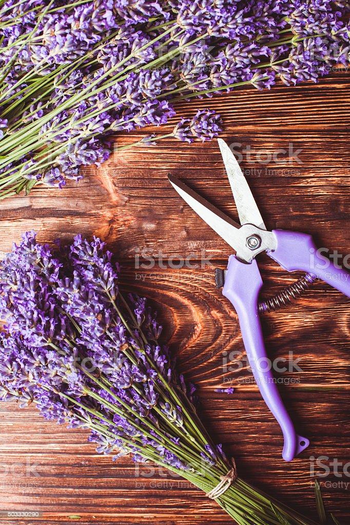Lavendel-Schneiden – Foto