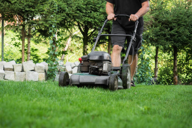 The lawn is mown with the lawn mower stock photo