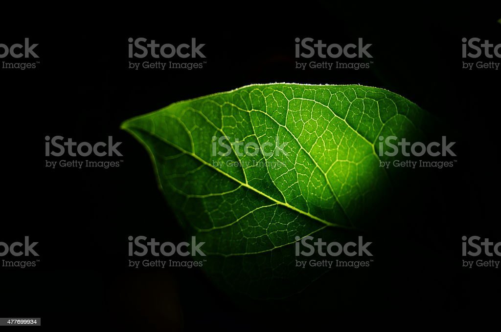 The leaf of a plant in the dark stock photo