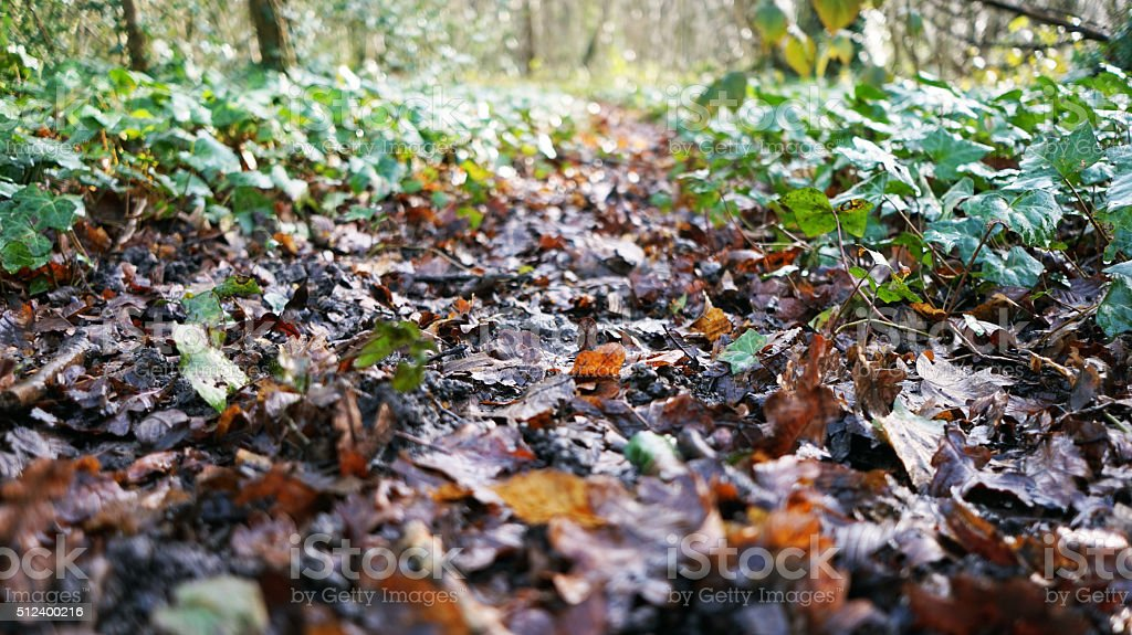 The leafy floor of the forest stock photo