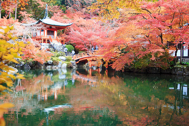 The leave change color of red in Temple japan Kyoto, Japan - November 24, 2013: Autumn season,The leave change color of red in Temple japan taoism stock pictures, royalty-free photos & images