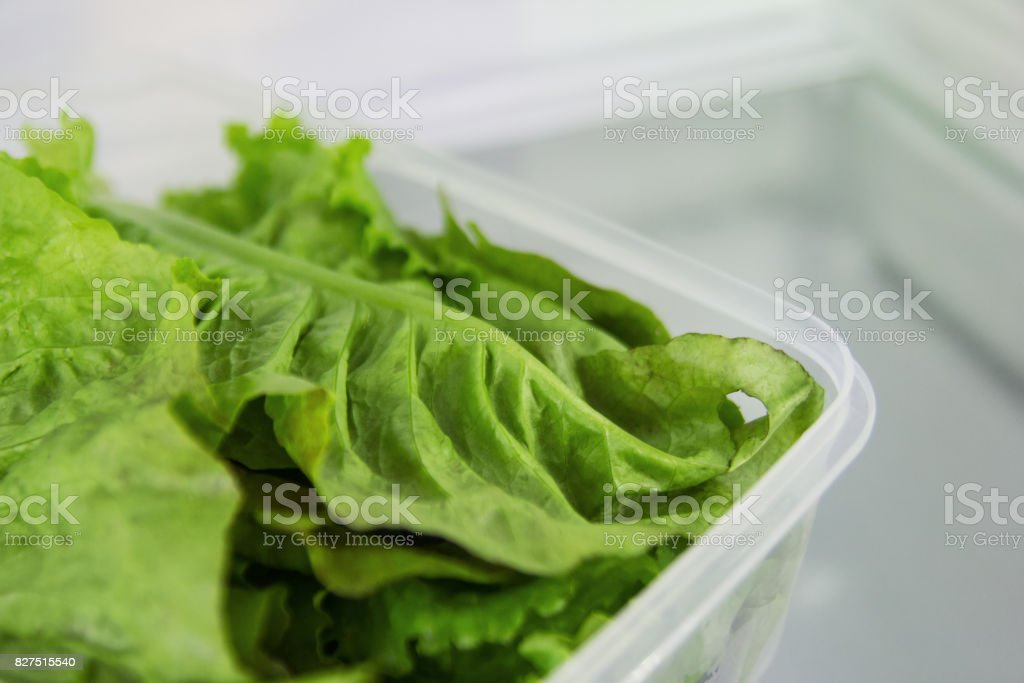 The leaves of green salad in the plastic food container on a shelf of a fridge. stock photo