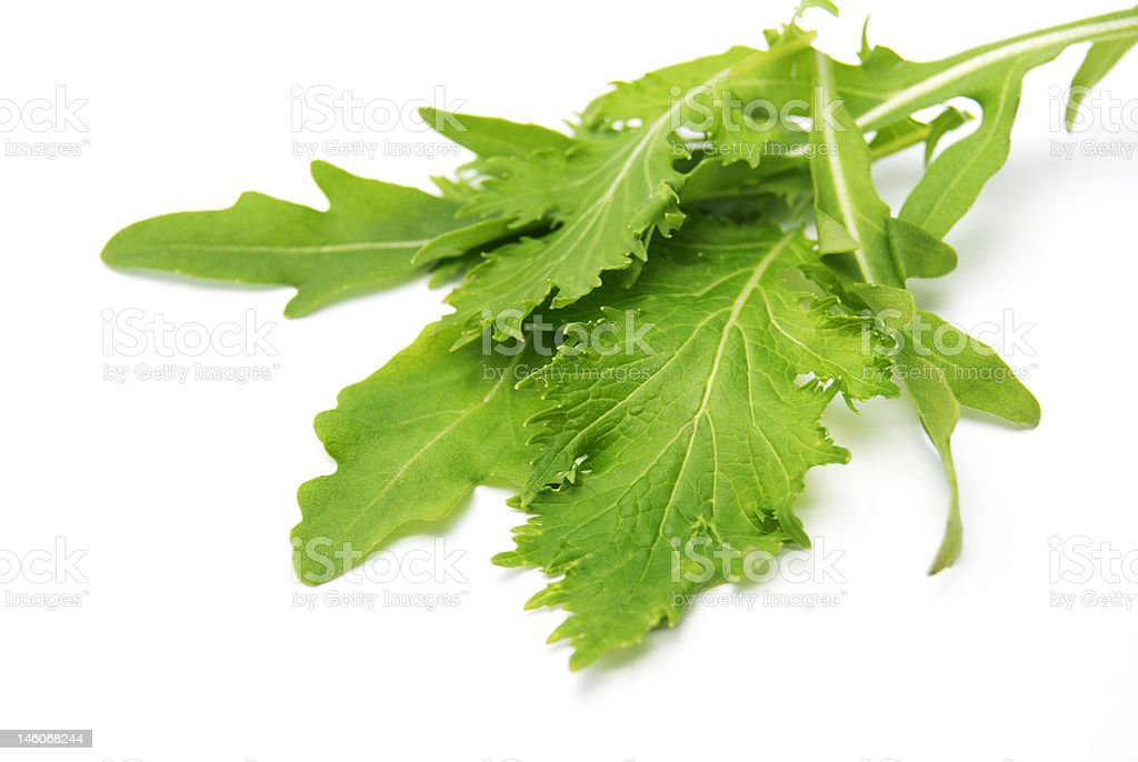 The leaves royalty-free stock photo