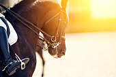 Equestrian sport.The leg of the rider in the stirrup, riding on a brown horse. Dressage of horses in the arena. Portrait sports brown stallion in the double bridle.