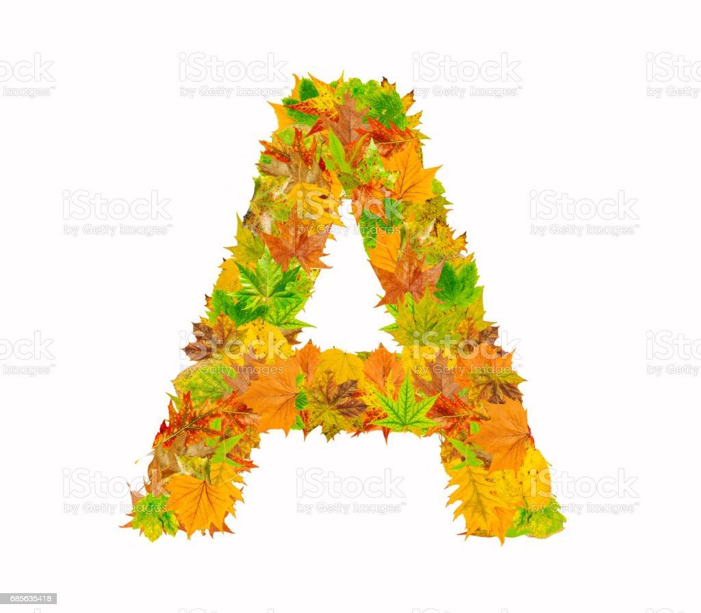 A 字母表中的字母作秋天的樹葉 免版稅 stock photo