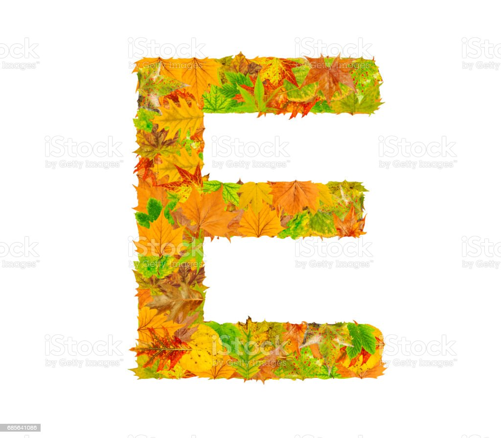 The letter E of alphabet made of autumn leaves royalty-free stock photo