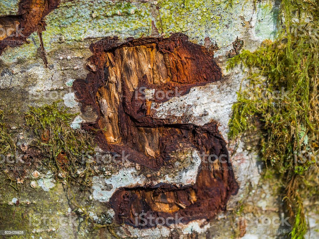 the letter S is carved on a tree trunk stock photo