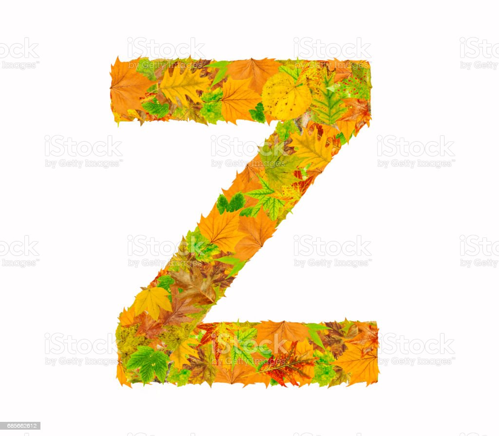The letter Z of alphabet made of autumn leaves foto de stock royalty-free