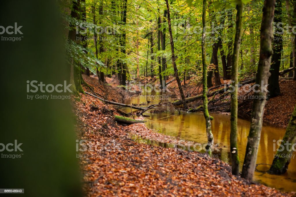 The leuvenumse creek is one of the few natural streams in Dutch nature. stock photo
