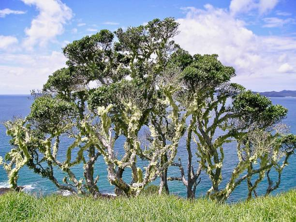 the lichen tree - mcdermp stock pictures, royalty-free photos & images
