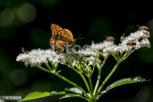 Butterfly - Insect, Daisy, Flower, Insect, Moth, Bumblebee