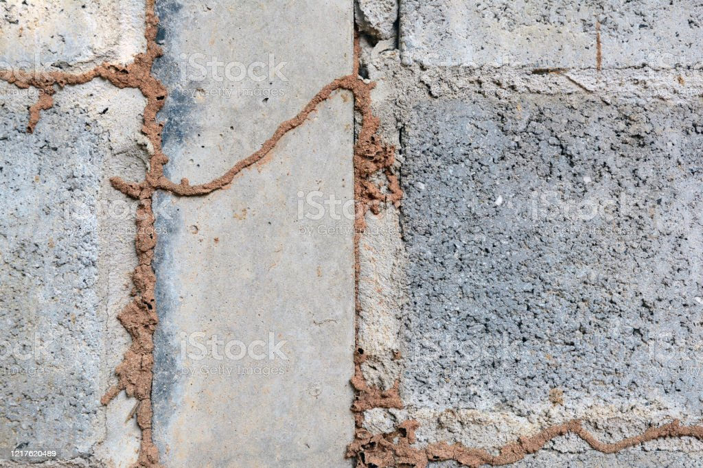 The Line Of Termite Nest On A Cement Wall Stock Photo Download Image Now Istock