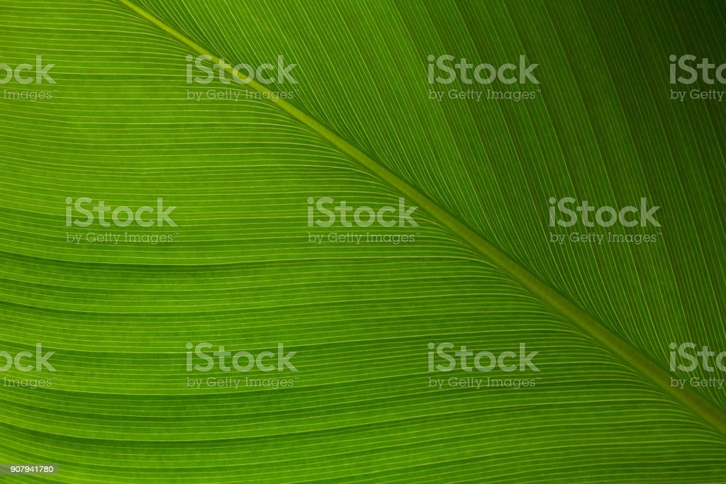 The line on the tropical climate leaf. stock photo