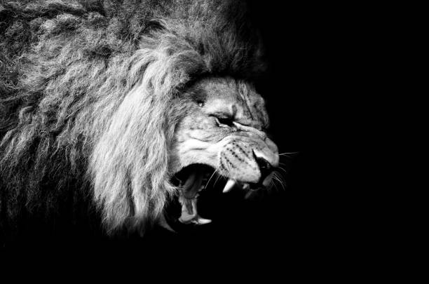 The lion king picture id863682010?b=1&k=6&m=863682010&s=612x612&w=0&h=a5xx awglnunrnl6oyrhqfcgvyl2xfiqejygdh51caa=