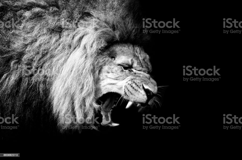 The Lion con cama King - foto de stock