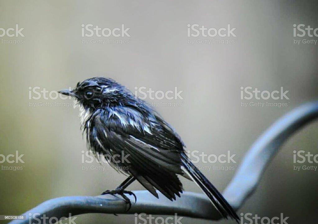 The little bird - Royalty-free Animal Stock Photo