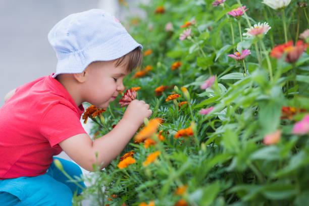 den lille pojken luktar blommorna i trädgården - summer smell bildbanksfoton och bilder