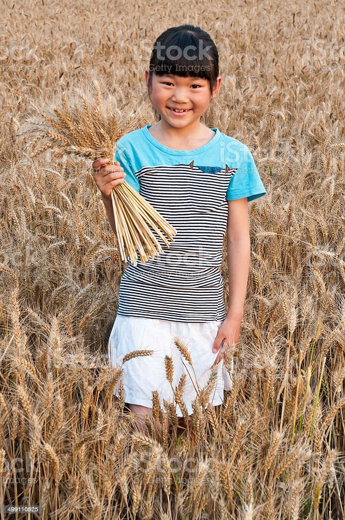 The little girl in the wheat field stock photo