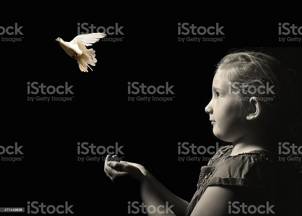 The little girl releasing a white dove from hands. stock photo