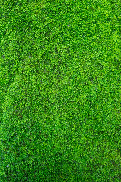 the little green plants. - moss stock photos and pictures