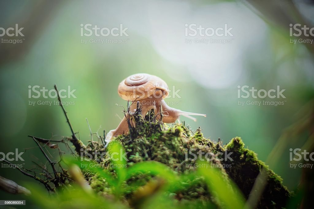 The little world of snail royalty-free stock photo