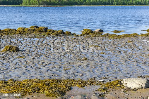 932662672 istock photo The littoral zone at low tide. 1181661334