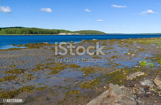 932662672 istock photo The littoral zone at low tide. 1183723358