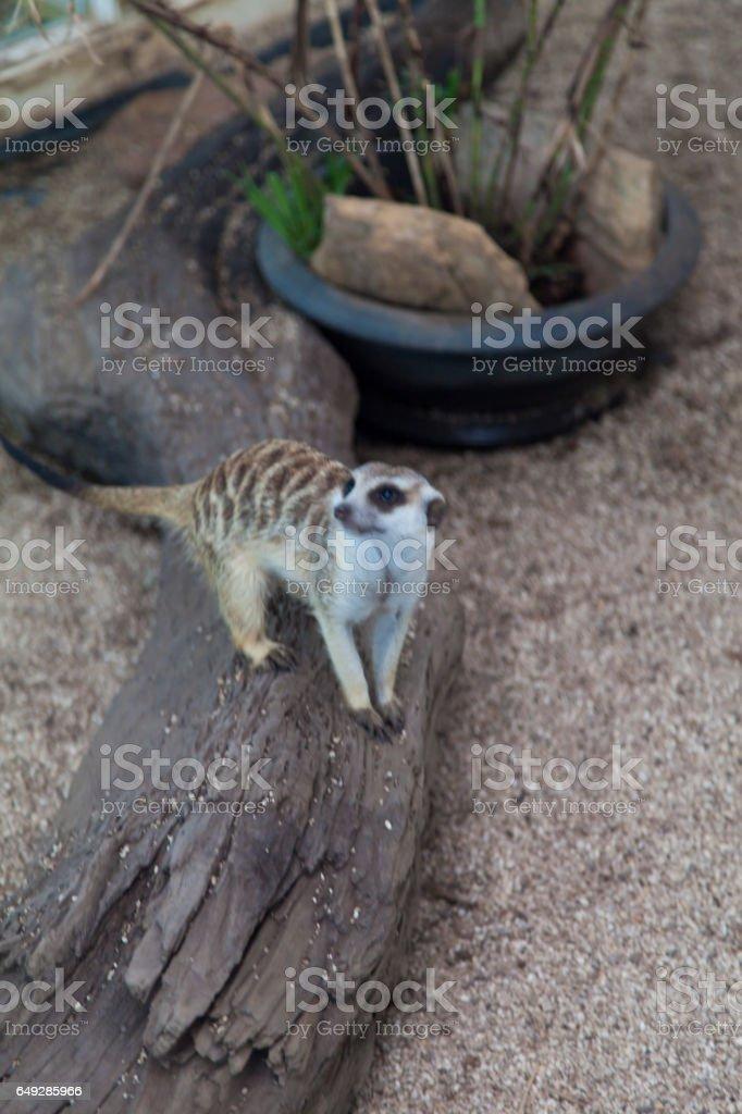 The lizard on hunting stock photo