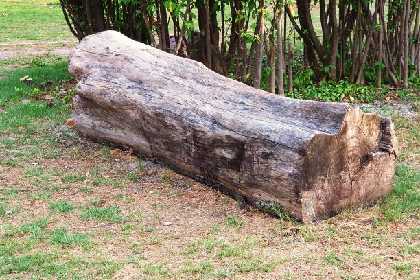 The log is a chair in the garden. – zdjęcie