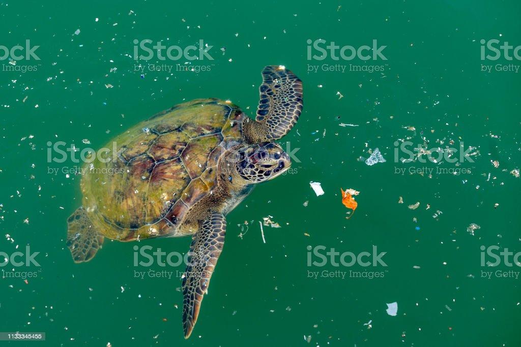 La tortuga boba nada en los desechos en el mar. La contaminación marina es un gran problema para las criaturas oceánicas. - Foto de stock de Accidentes y desastres libre de derechos