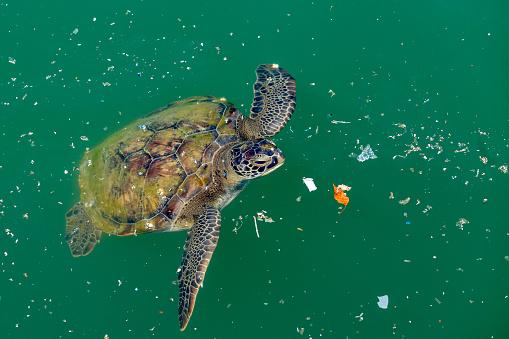 La Tortuga Boba Nada En Los Desechos En El Mar La Contaminación Marina Es Un Gran Problema Para Las Criaturas Oceánicas Foto de stock y más banco de imágenes de Accidentes y desastres